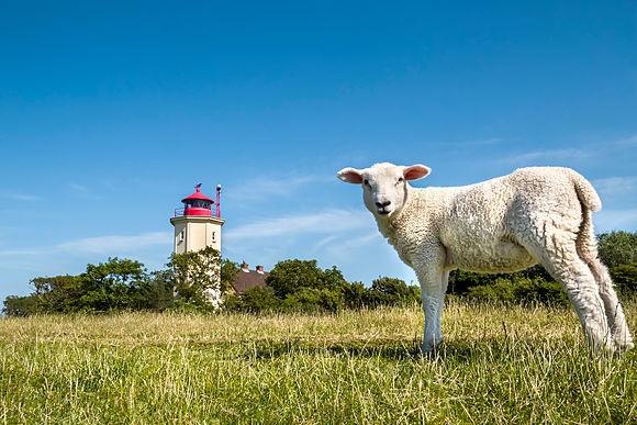 Schleswig-Holstein von Sabine Lubenow