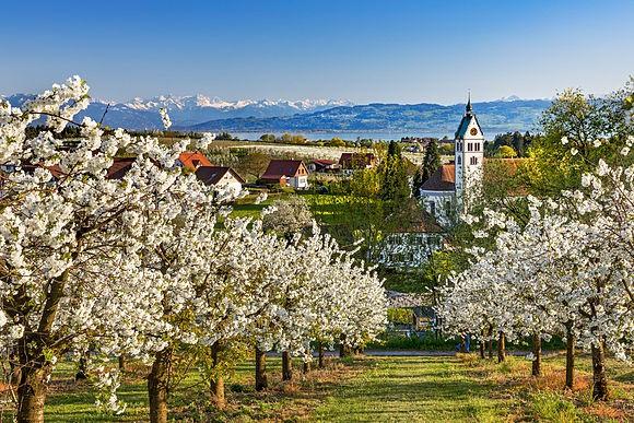 Bodensee von Reinhard Schmid