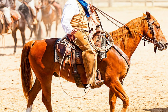 Texas by Kav Dadfar