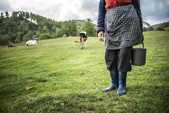 Romania Transylvania and the Carpathian Mountains by Matt Williams-Ellis
