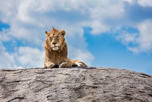 Neue Bilder > Eine Safari in Tansania