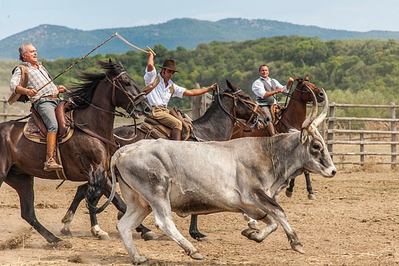 The Ancient Tradition of Transhumance Going back to the past