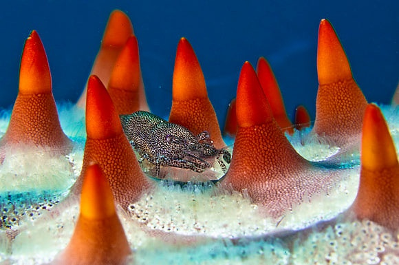 Komodo Island by Giordano Cipriani