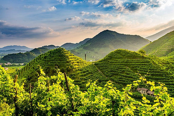 Prosecco Hills stock images
