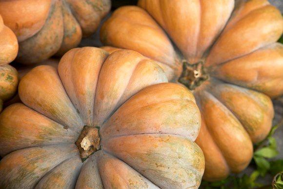 Halloween's Star of the Night The versatility of the pumpkin on Simephoto